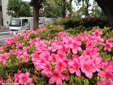 Near Tokyo Station