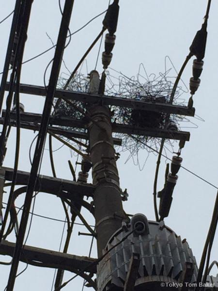 Nest Mark